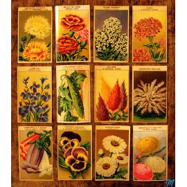 etiquette grainetier ancienne etiquettes anciennes papier vintage 1950 1960 fleurs