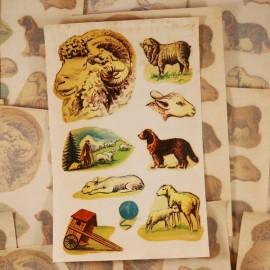 décalcomanie décalco fleur 1950 1960 sticker 1 bouc mouton bélier animal