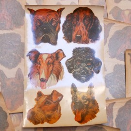 décalcomanie décalco fleur 1950 1960 sticker 6 chien chiens
