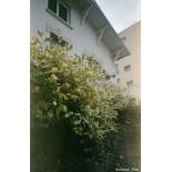 pellicule périmée argentique 35mm couleur fuji fujifilm superia 100 24 poses exemple photo test