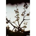 Kodak Colorplus 35mm 200 iso 135 analog film 36 exposures 200 asa color plus example sample