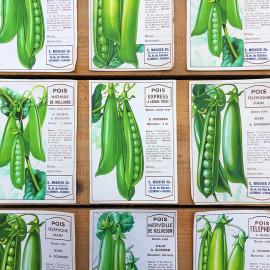 étiquette ancien ancienne légume graine pois graines légumes 1950 illustration