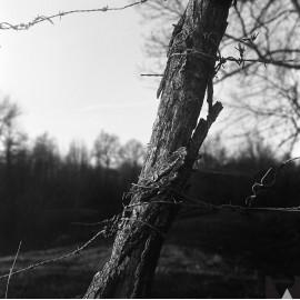 kodak tri-x 400 film pellicule argentique noir et blanc rendu test photo exemple image
