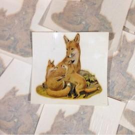 Décalcomanie vintage sticker eau renard 1960 école