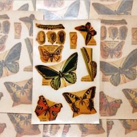 décalcomanie papillons papillon vintage stock école sticker eau 1960