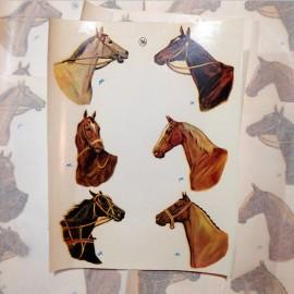 décalcomanie chevaux cheval vintage stock école sticker eau 1960