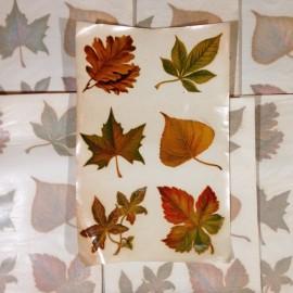 décalcomanie feuille feuilles vintage stock école sticker eau 1960