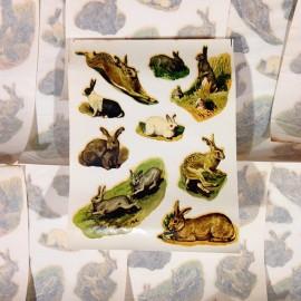 lapins lièvres sticker eau décalcomanie école 1960 stock vintage