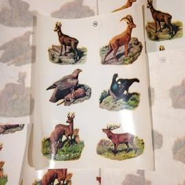 Animals vintage transfer sticker water 1960 school