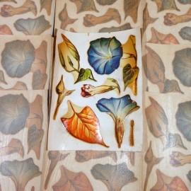 fleurs sticker eau stock vintage décalcomanie école 1960