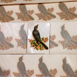 bird tree transfer water vintage sticker school 1960