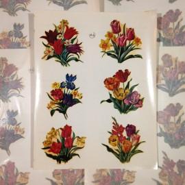 Tulipes fleurs décalcomanie ancien vintage sticker eau école papeterie 1960