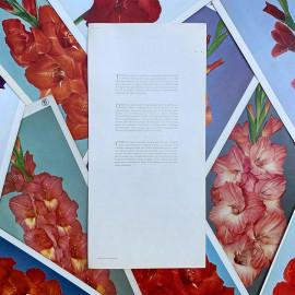 flower gladiolus dutch bulb nature poster cardboard antique vintage 1980