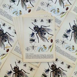 carte éducative pharmacie bayer mouches moustiques chimie laboratoire phytochim