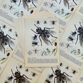 educative instructional explanation card illustration pharmacy bayer 1960 phytochim insects bugs fly