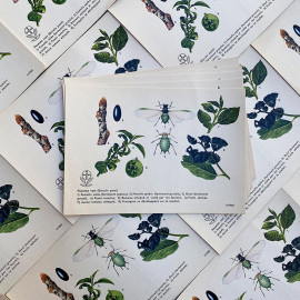 educative instructional explanation card illustration pharmacy bayer 1960 phytochim insects bugs fly green aphid