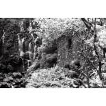 washi film Z quasi infrarouge noir et blanc 35mm exemple