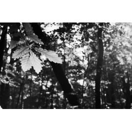 washi film d 500 iso sputnik 35mm noir et blanc forte acutance précis aérien