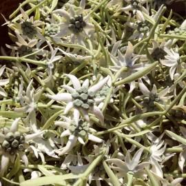 edelweiss plastic fake false vintage