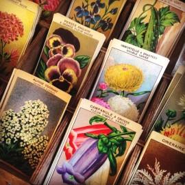vintage seed labels paper antique flower plant 1950 1960