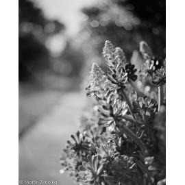 Rollei RPX 400 pellicule argentique noir et blanc film test rendu exemple photo image