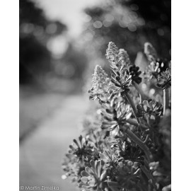 Rollei RPX 400 film analog black and white sample shot test picture photo image